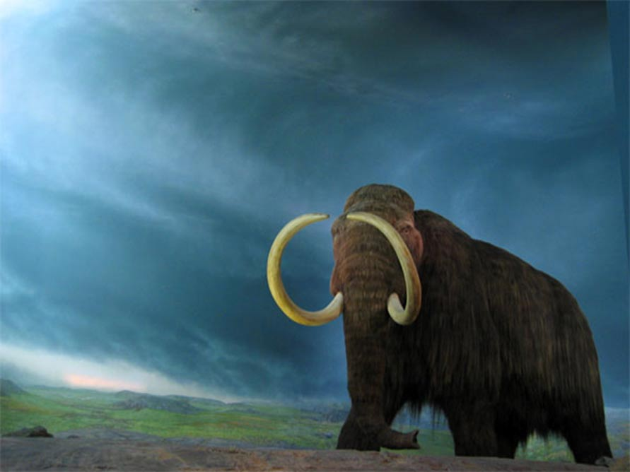 The Wooly Mammoth, Royal BC Museum, Victoria, British Columbia