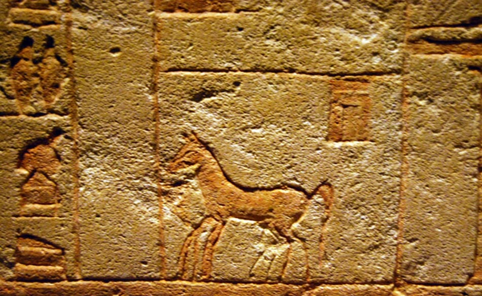 Detail from the Fragment of a relief showing a horse in a stable. 18th Dynasty (1569-1315 BC), New Kingdom.