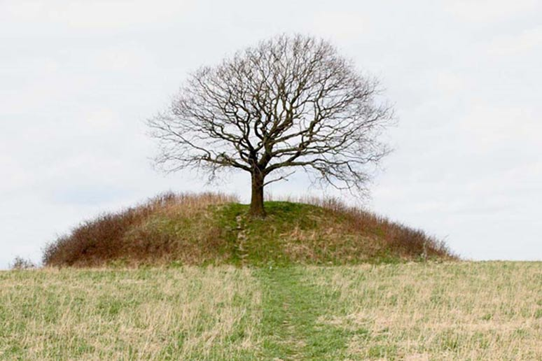 A tree grows atop Mysselhøj, a Nordic Bronze Age burial mound in Roskilde, Denmark.